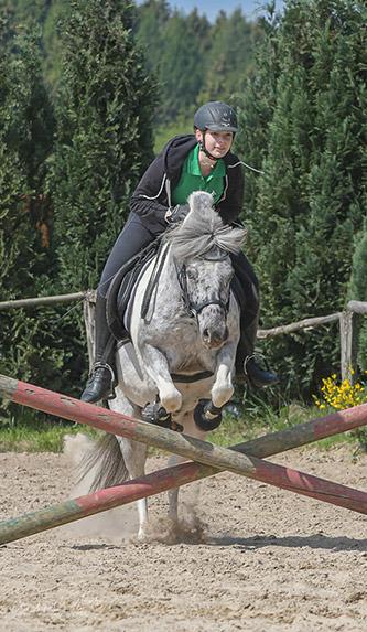 Hof Rolle Meinerzhagen Pferd Ausbildung